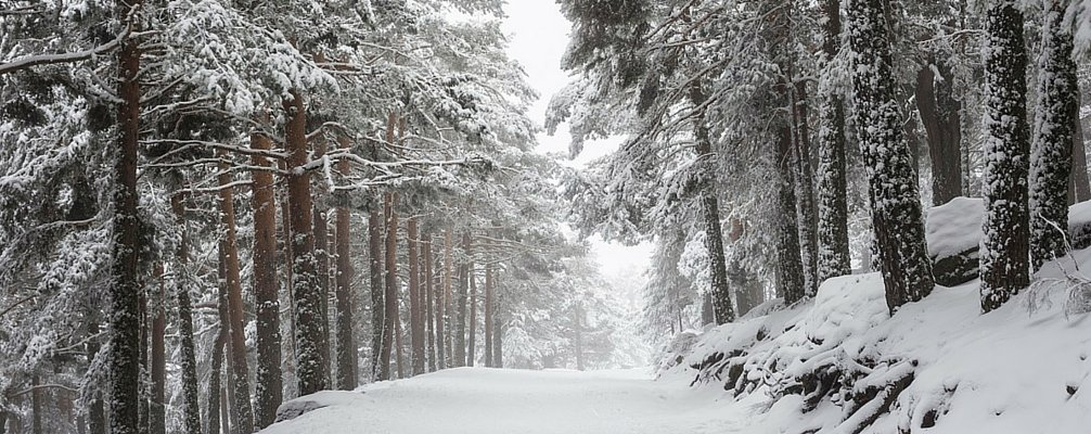 Gifts : How to take good photos in winter _ #Magazine  https://t.co/pN6UFMXzTb https://t.co/yfaYcVWIiG