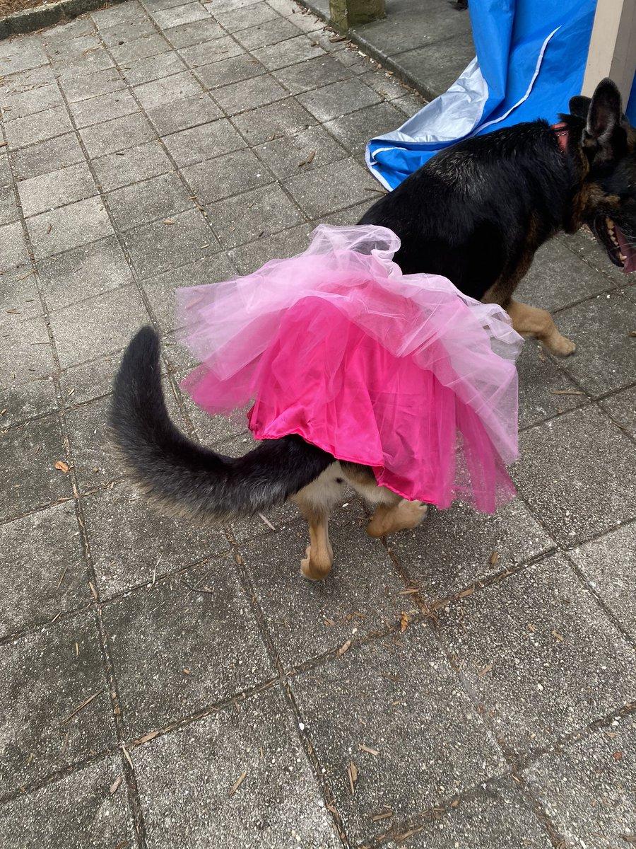 #ballerina https://t.co/iB6esa1AE3
