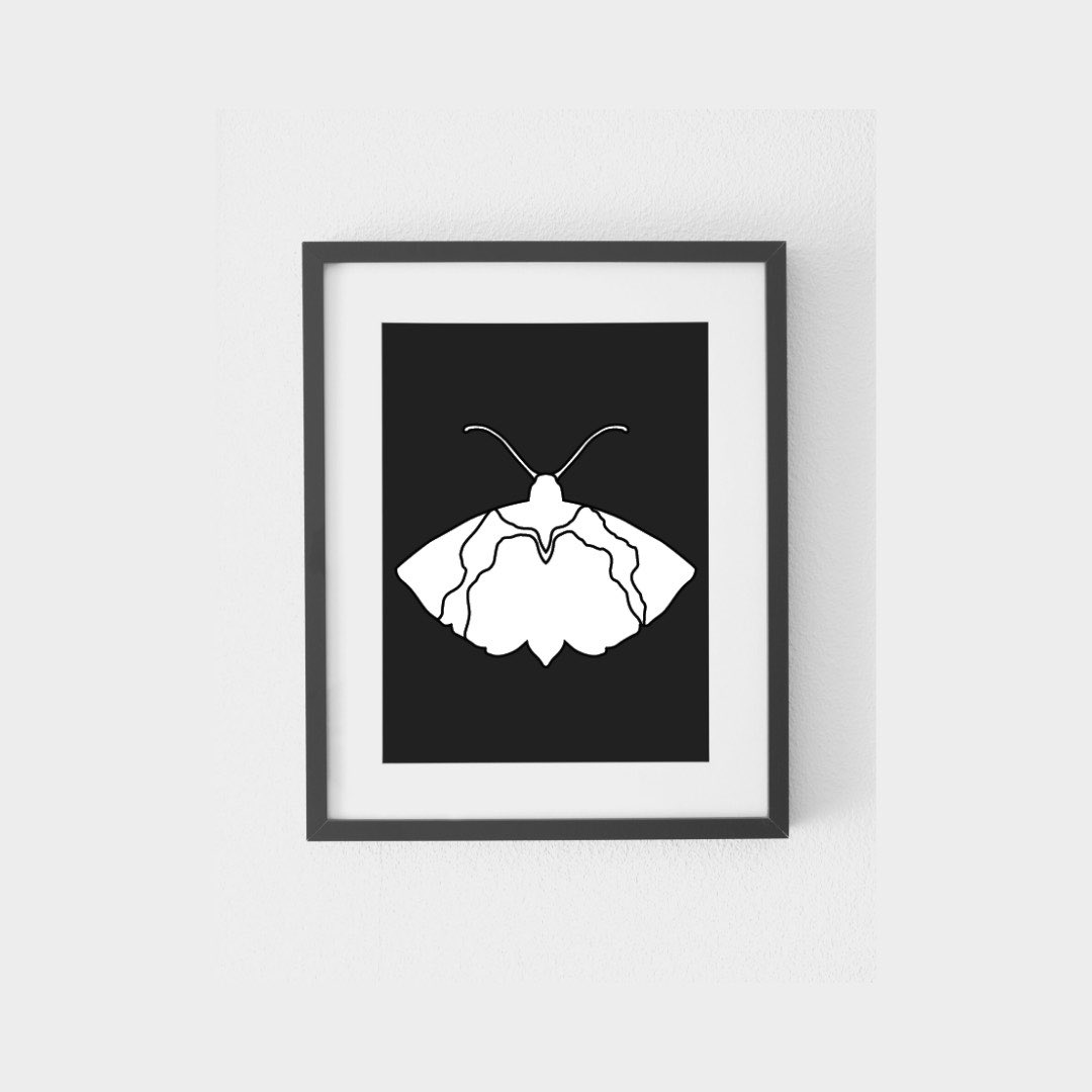 Don't get confused that it's bad that Moths are vulnerable and weak, they tend to be like that due to their blind faith in following the direction of the light be it of the sun, moon or stars.
