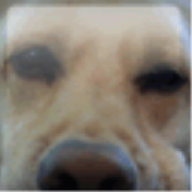just thought about the dog from the xbox 360 gamer pic has probably passed away by now :( https://t.co/e1hcaFtyxM