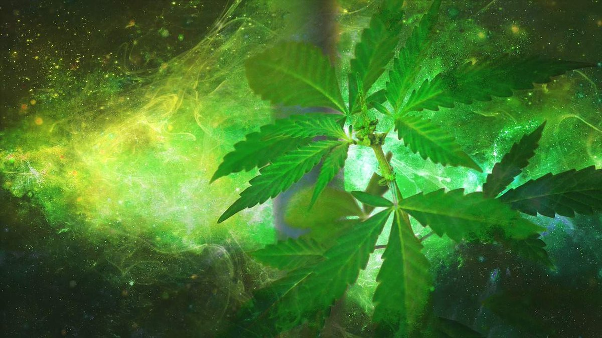 #cannabis #weed #marijuana Election 2020 Cannabis referendum: Top NZ health experts say vote 'yes' in Medical Journal editorial Some of New Zealand's top medical experts have come out in favour of a