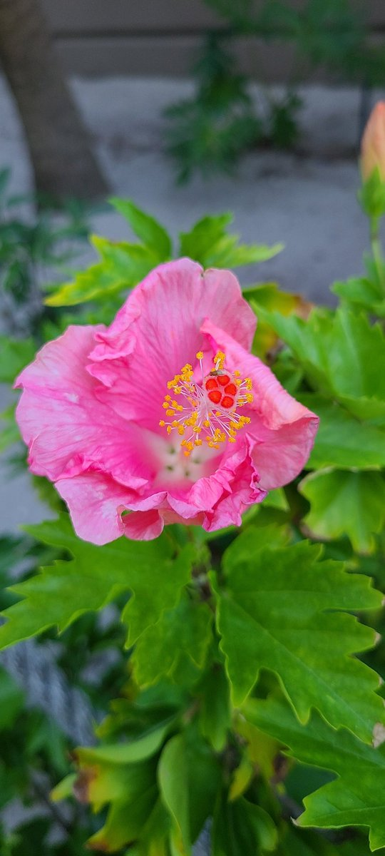 #Flowers #nature #naturelovers #photography #FridayVibes #SouthCarolina https://t.co/uh0wBimZcS