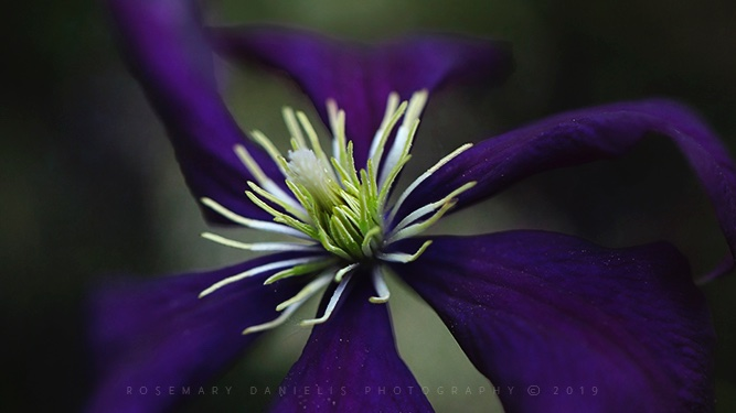 #She, in the #dark, found #light, brighter than many ever see. ~ #LangstonHughes https://t.co/makm5HqoBA #shinebright#flowers #nature #darkpurple https://t.co/8yc8uENOuu