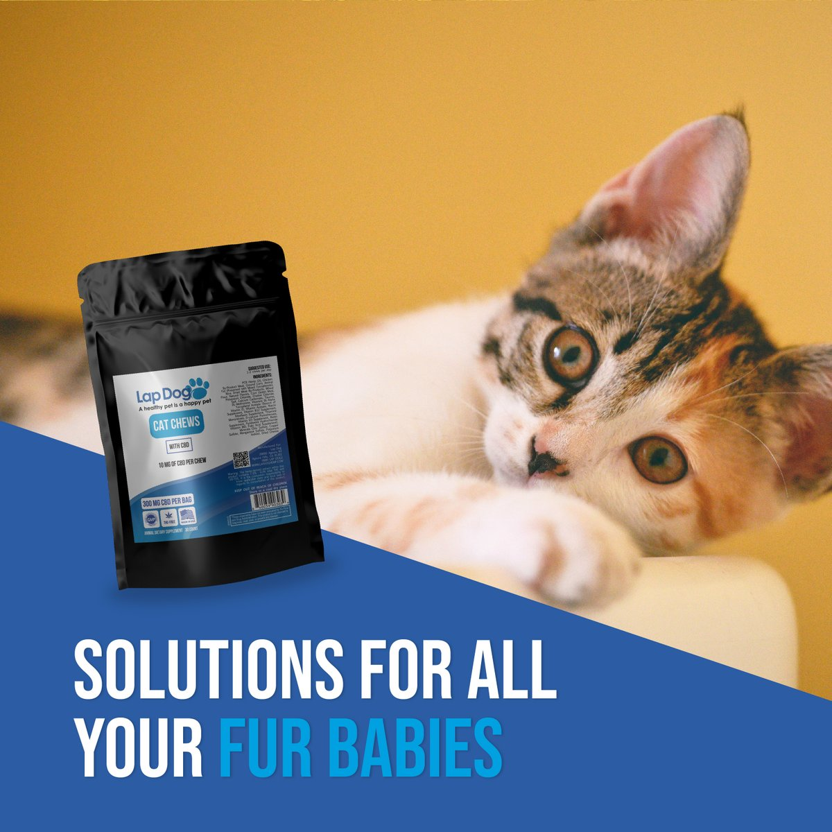 🐱 Solutions for all your fur babies! 🐰 #lapdog #cbd #pet #petsolutions https://t.co/VnWz99TKHU