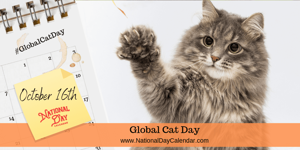 Betty C Jung On Twitter 10 16 2020 Public Health Blog October 16th Is Globalcatday Global Cat Day On October 16th Recognizes The Need To Adopt And Foster Cats Https T Co Szudxuyjxx