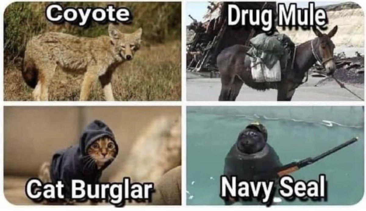 coyote, drug mule, cat burglar, navy seal, TeamKJ, Kevin Jackson