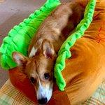 犬が最高に空気読んだ結果...ホットドッグが完成‼