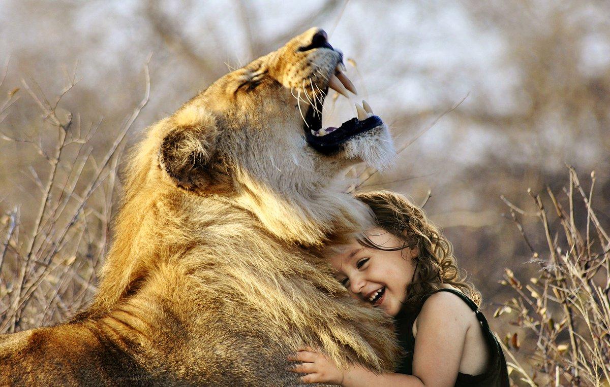 lion and baby love    #wildliferehab #wildlifephotography #global4nature #wildlife_inspired #animalsofinstagram  #animals #africa #animalpolis #wildlifeowners #wildlife_perfection   #wildlifeonearth   #wildlifephotos  #ig_africa #majestic_wildlife_   #naturephotography #lion https://t.co/wHrqD3I4He