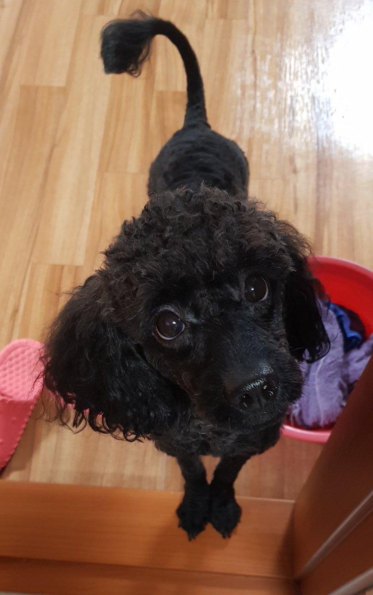 SyAIL - 집가서 강아지랑 놀고싶어..
