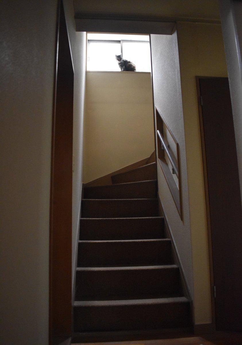 いい感じの猫の写真が撮れたから映画のポスターみたいにした。ホラー感がすごい。