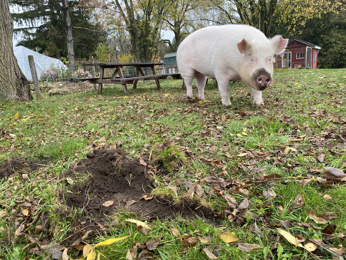 Mysterious holes keep showing up in the lawn; it's probably squirrels.