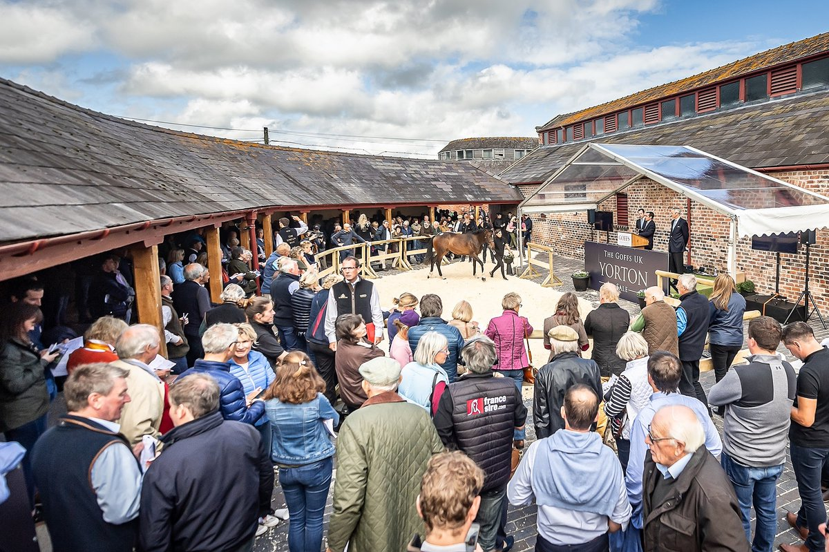 The new Goffs UK November P2P Sale has been moved to @YortonFarm and will be held on the revised date of Wednesday 11 November.  Government restrictions have led to a mandatory change in the sale's location and date.   NEWS > https://t.co/fQaasYn48x https://t.co/YOG1Ieitbc