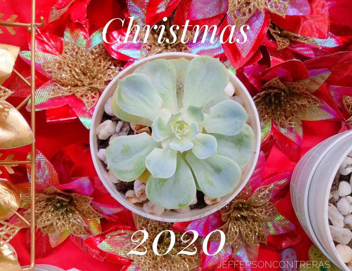 Weekend: Saturday  Chistmas Is Near...  We must Celebrate it,...  #christmas2020 #ChristmasMustCelebrate #Christmas  #photographer #Photography #plantitosofmanila #plantitosandplantitas #plantsofinstagram #plantstagram