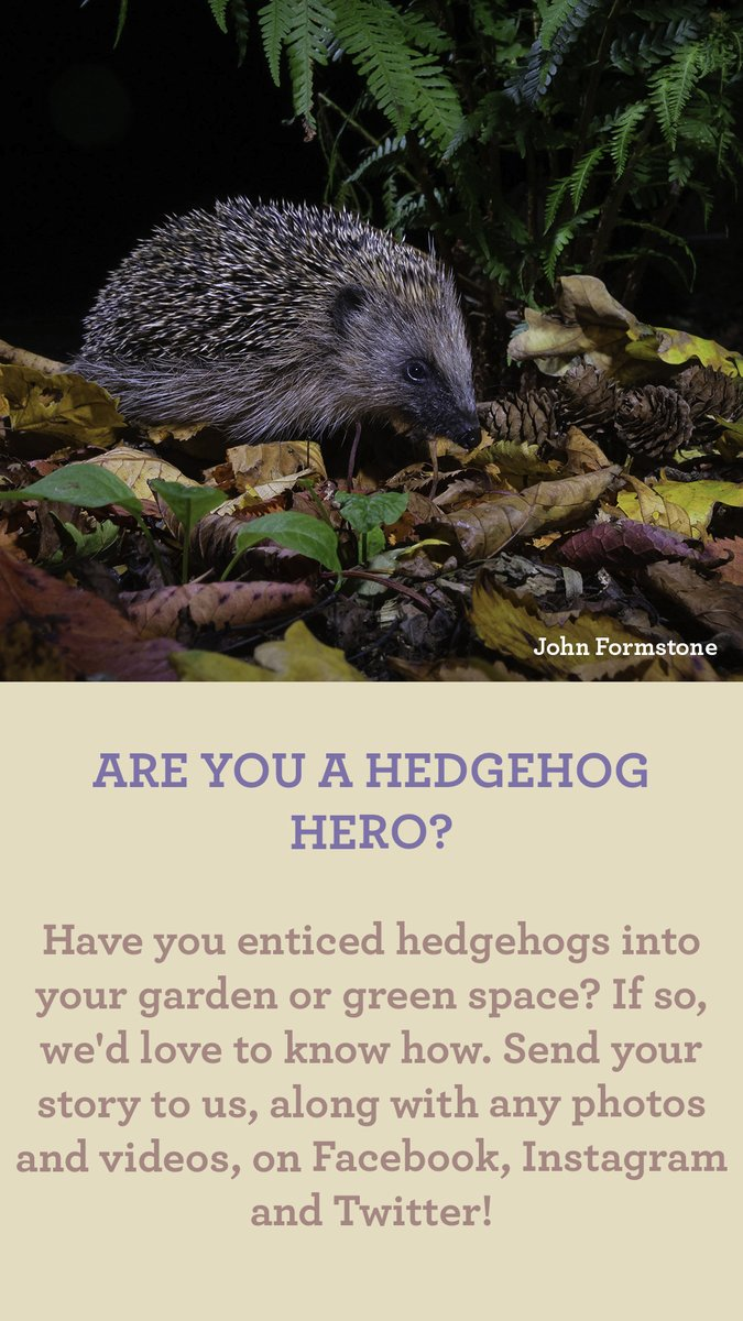 ARE YOU A HEDGEHOG HERO?  Have you enticed hedgehogs into your garden or green space? If so, we'd love to know how. Send your story to us, along with any photos and videos, on Facebook, Instagram and Twitter!  #Autumnwatch 🍂 https://t.co/nx81LBzlCb