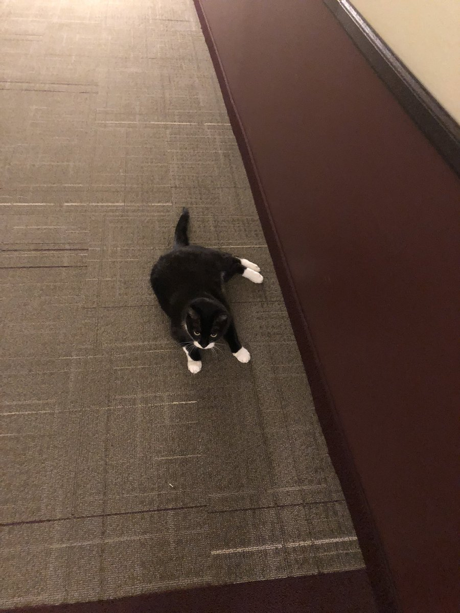 I have escaped again into the hallway....catch me if you can bwahahahahahahaha!! #CatsOnTwitter #catsofinstagram #CatsOfTheQuarantine https://t.co/4RAVqR7kfu