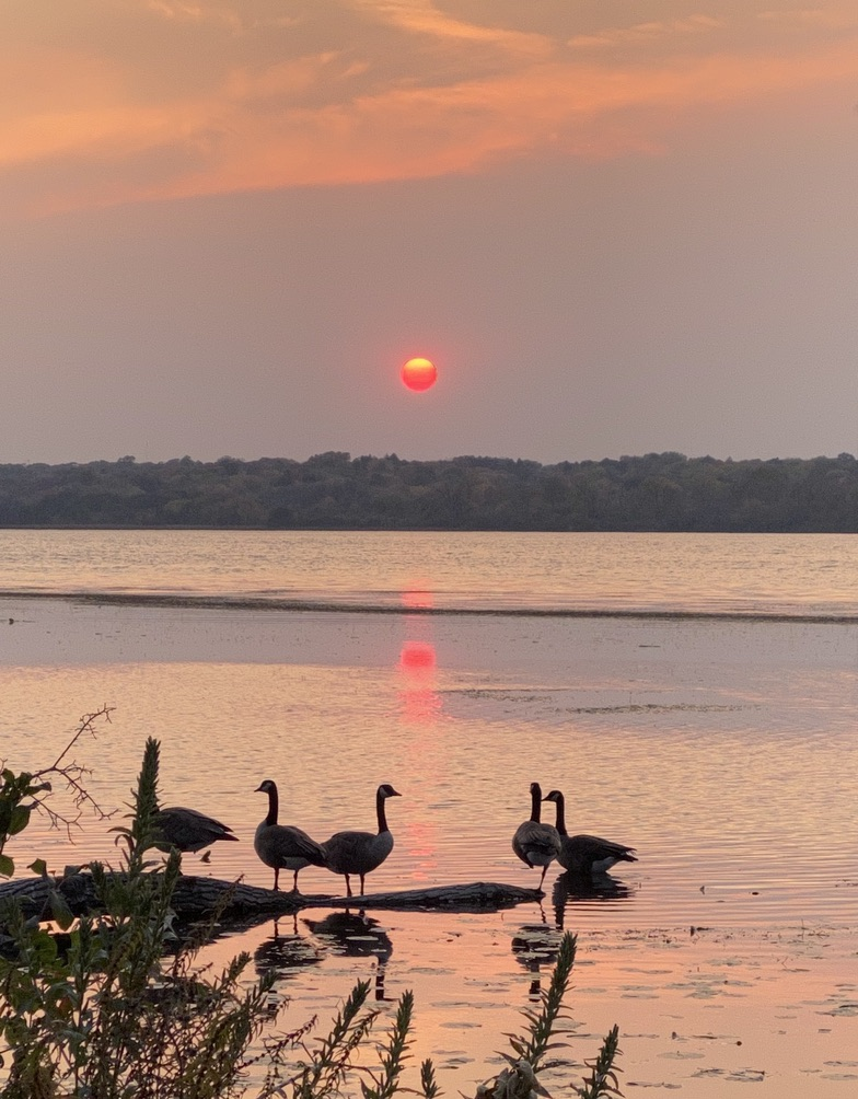 Sunset over Lake Wingra, #Madison WI a couple weeks ago, after a long #bike ride.  But now winter is around the corner.  @madisondotcom  @AldoLeopoldFdn https://t.co/ICX1CMgZ8j