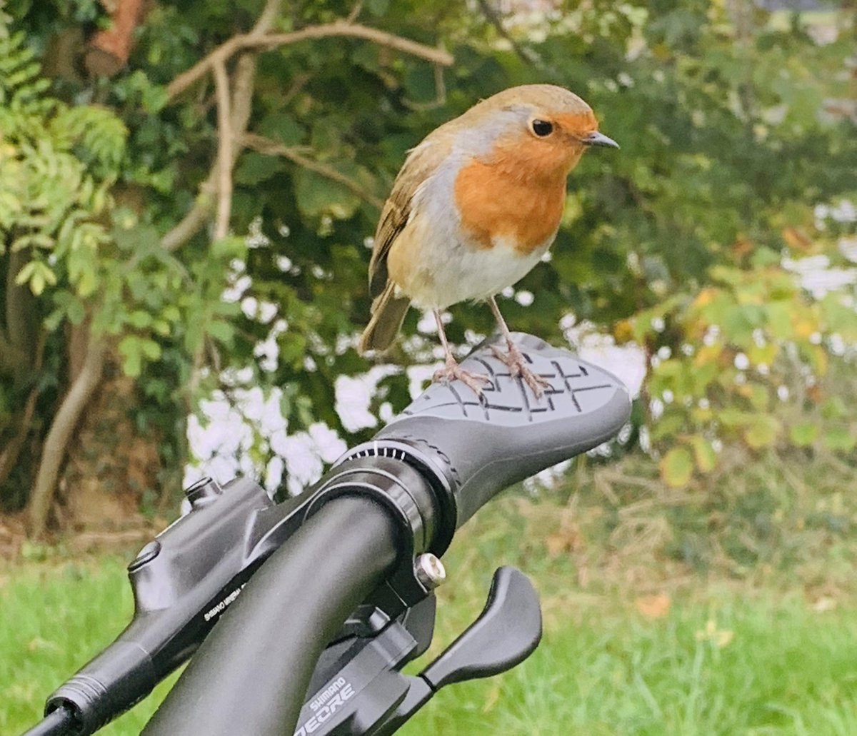 Todays Photo of the Day is of a Robin hitching a ride on Adam Miless bike#BBCCountryfileMagPOTD