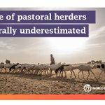 Image for the Tweet beginning: In the #Sahel pastoral herders