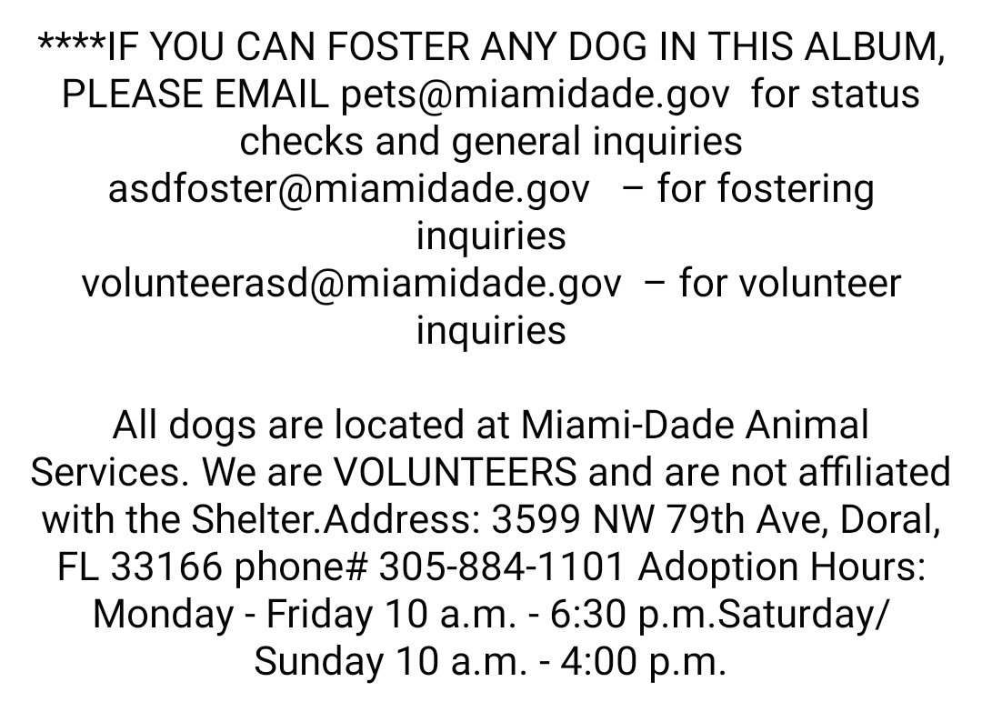 #USA #Miami #Alert #Urgent #SOS #LastCall #LastChance These #young #adult #dogs #needs to be #adopted / #fostered / #rescued right now, please #save them!!!  https://t.co/KSSQUWlZJC  #AdoptDontShop https://t.co/cI8kMyZJns