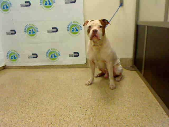 #USA #Miami #Alert SUPER  #Urgent #SOS #LastCall #LastChance #Medical #Emergency #Senior (More than 7 years old) #dog (#Tarzan, #A1703131) #needs to be #adopted / #fostered right now, please #save him!   #AdoptDontShop https://t.co/0L8G4KVL7m