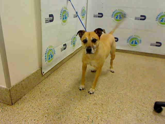#USA #Miami #Alert #Urgent #SOS #LastCall #LastChance #Senior (More than 7 years old) #dog (#Mateo, #A1462302) #needs to be #adopted / #fostered / #rescued right now, please #save him!   #AdoptDontShop https://t.co/5HA2CloVkt