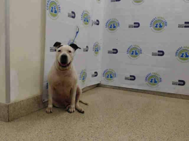 #USA #Miami #Alert #Urgent #SOS #LastCall #LastChance #Senior (More than 7 years old) #dog (#Kiara, #A1567290) #needs to be #adopted / #fostered right now, please #save her!   #AdoptDontShop https://t.co/wbdCiKWRso