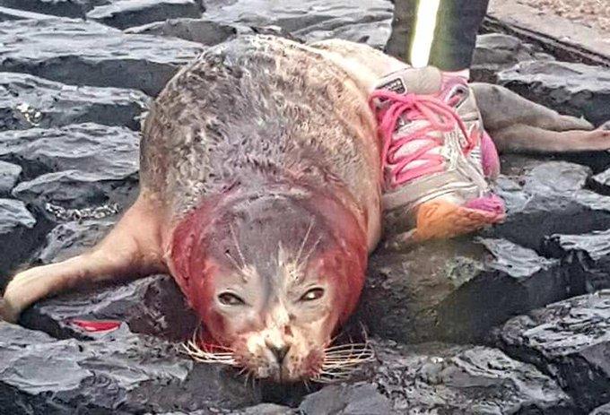 Zeehond doodgebeten bij haven Scheveningen https://t.co/BlECKl9daE https://t.co/u62zFpxbqA