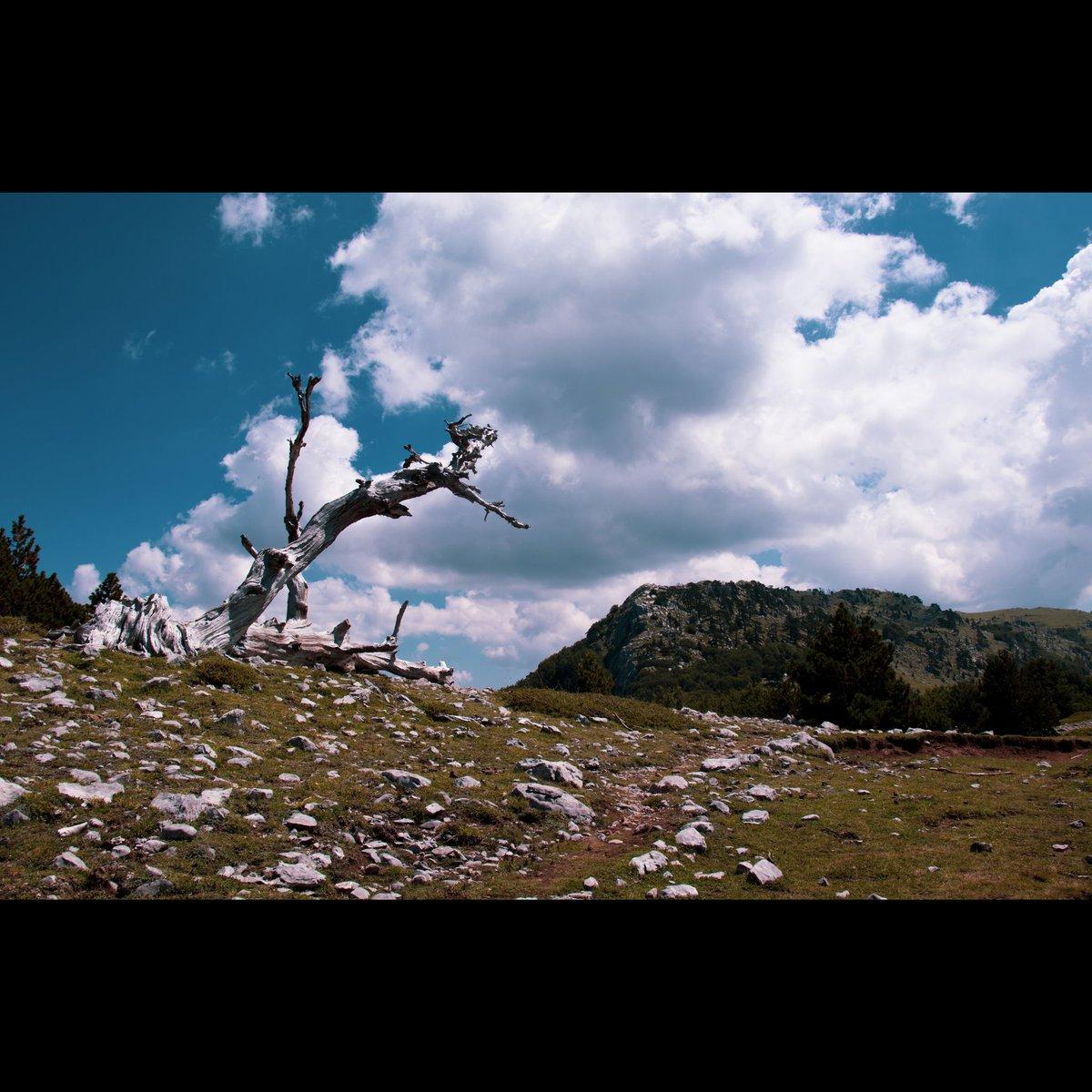 #photography #photooftheday #photo #picoftheday #PictureOfTheDay #Travel #travelphotography #nature #naturelovers #NaturePhotography #Italy https://t.co/4nPQIUGhzm