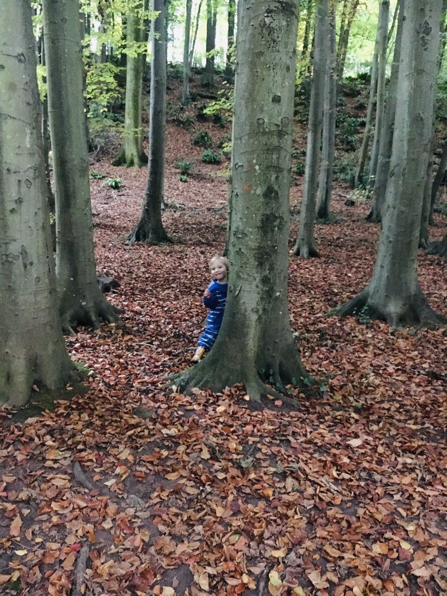 Hiding in the woods yesterday in the hope of spotting some bears! We can report, however, that they are all following the rules & staying at home #DinasPowysWoods #OutdoorAdventure #NoBearsHere https://t.co/2Ov3OC2j56