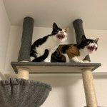 「掃除機は絶対許さない会」の猫ちゃんたち!態度で示す瞬間の画像!