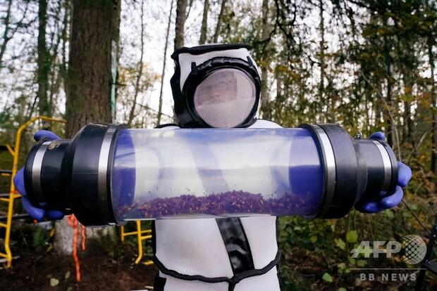 【無事】米国で初発見、オオスズメバチの巣を駆除オオスズメバチは在来種ではなく、米国内に入った経緯は明らかになっていない。また、オオスズメバチは別名「殺人バチ」とも呼ばれている。