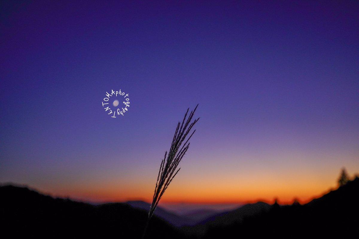 ススキと夕焼けと月  #空 #カコソラ #夕焼け #カメラ初心者 #カメラ好きな人と繋がりたい #ファインダー越しの私の世界 #レンズ越しの世界 #キリトリセカイ #α7III #photo #photography https://t.co/Lsa78WZRmC