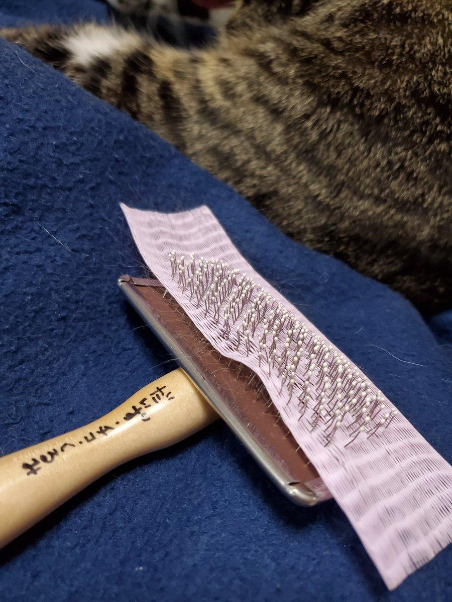 これ知ってから猫のブラッシングすごく楽になったんだけどダイソーで売ってる人間用のブラシの髪の毛楽に取れるネットなんだけど猫ブラシに使うとめっちゃ便利だった✨猫のブラシの毛取るの全然取れないのに見てこれやばくない??フェルトシートみたいに一瞬で取れる😭🙏