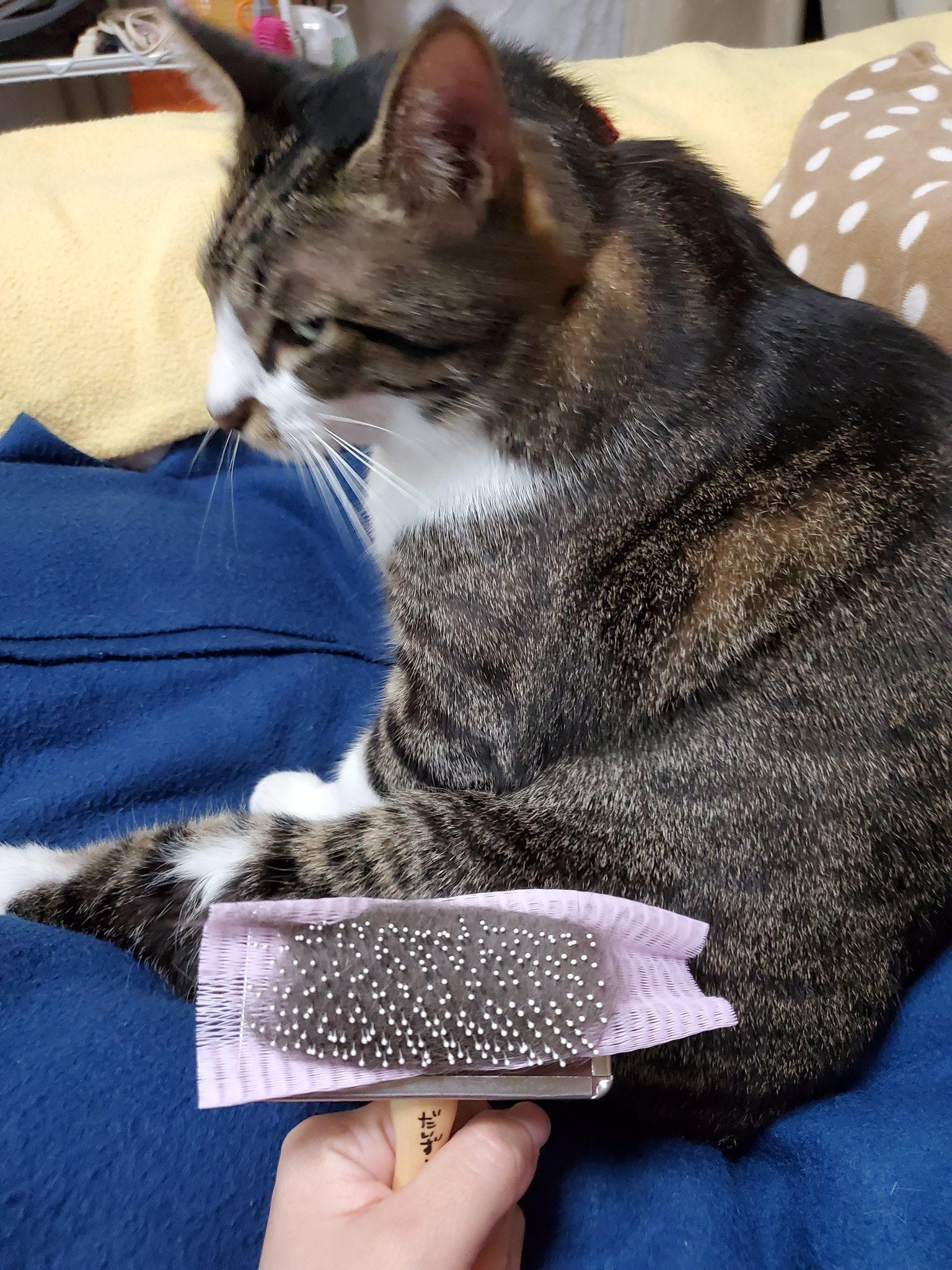 猫ブラシ用便利グッズ02