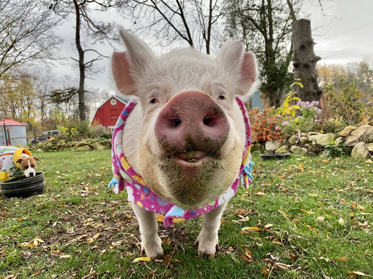 I can see my breath this morning; it's like little puffs of happiness every time I smile.