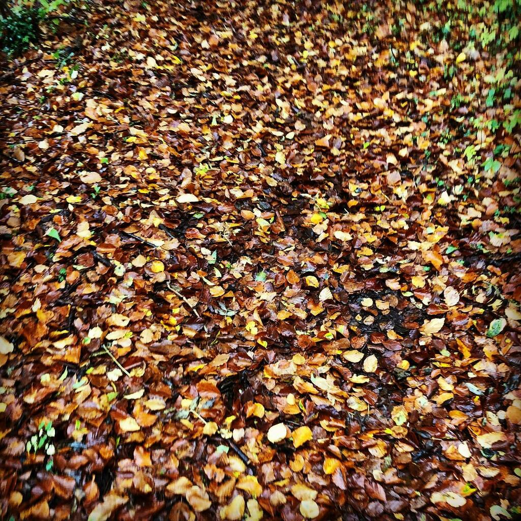 Autumn means a lot of different things to UK Farmers. Drilling crops, sheep tupping, bringing the cows in for winter or simply leafy woodland walks. What is Autumn to you? 🍂 🍂  . #autumn #autumnvibes🍁 #leafy #ukfarming #walks #hampshire #reflection #… https://t.co/N8WyBNGWnq https://t.co/BhBIlFddv9