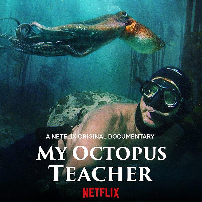 'Strange octopus level of joy'  A glorious documentary that had me mesmerised, amazed and scared - #MyOctopusTeacher #molluscs #octopus #documentary https://t.co/Yjn3KWXSkU