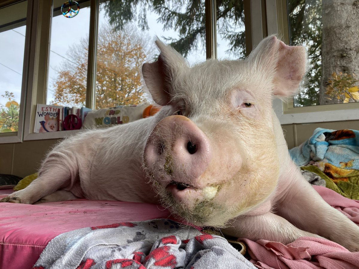I put my smile on this morning, but that's all I'm wearing because Sunday is my day of rest.