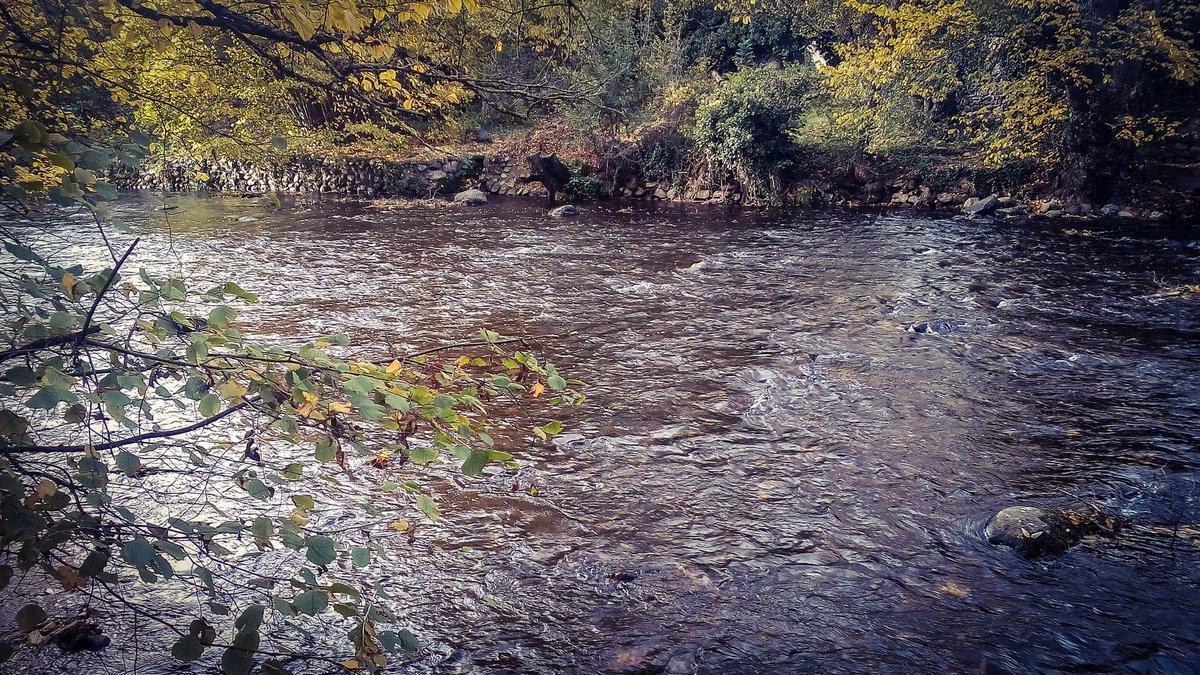 #paysage #reflet #photography #photo #photographer #photoshoot #Photographie #soleil #NaturePhotography #PhotosOfMyLife #photographyislife #riviere #Auvergne #pierre #bordderiviere https://t.co/5ACpt1A3zE
