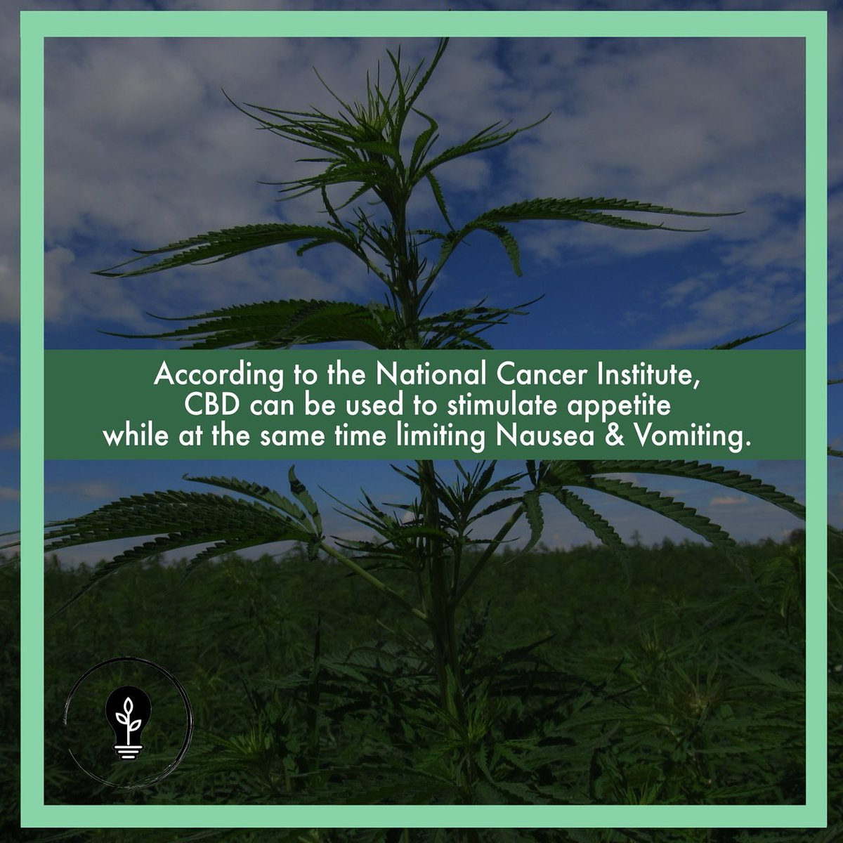 🤔Did you know, according to the #National #Cancer #Institute #CBD can be used to #stimulate #appetite while at the same time limiting #nausea & #vomiting?💡 https://t.co/gij2rHI6sn