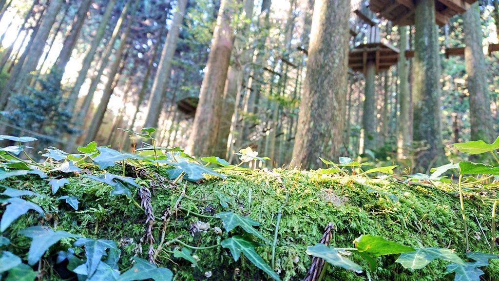 おはようございます! 本日も晴天で絶好のアドベンチャー日和です。 大自然の中でおもいっきり深呼吸しませんか? ご来場の際はお電話にてご予約お願いします! #予約制 #森で深呼吸 #森の写真 https://t.co/XG2EmYdvUT