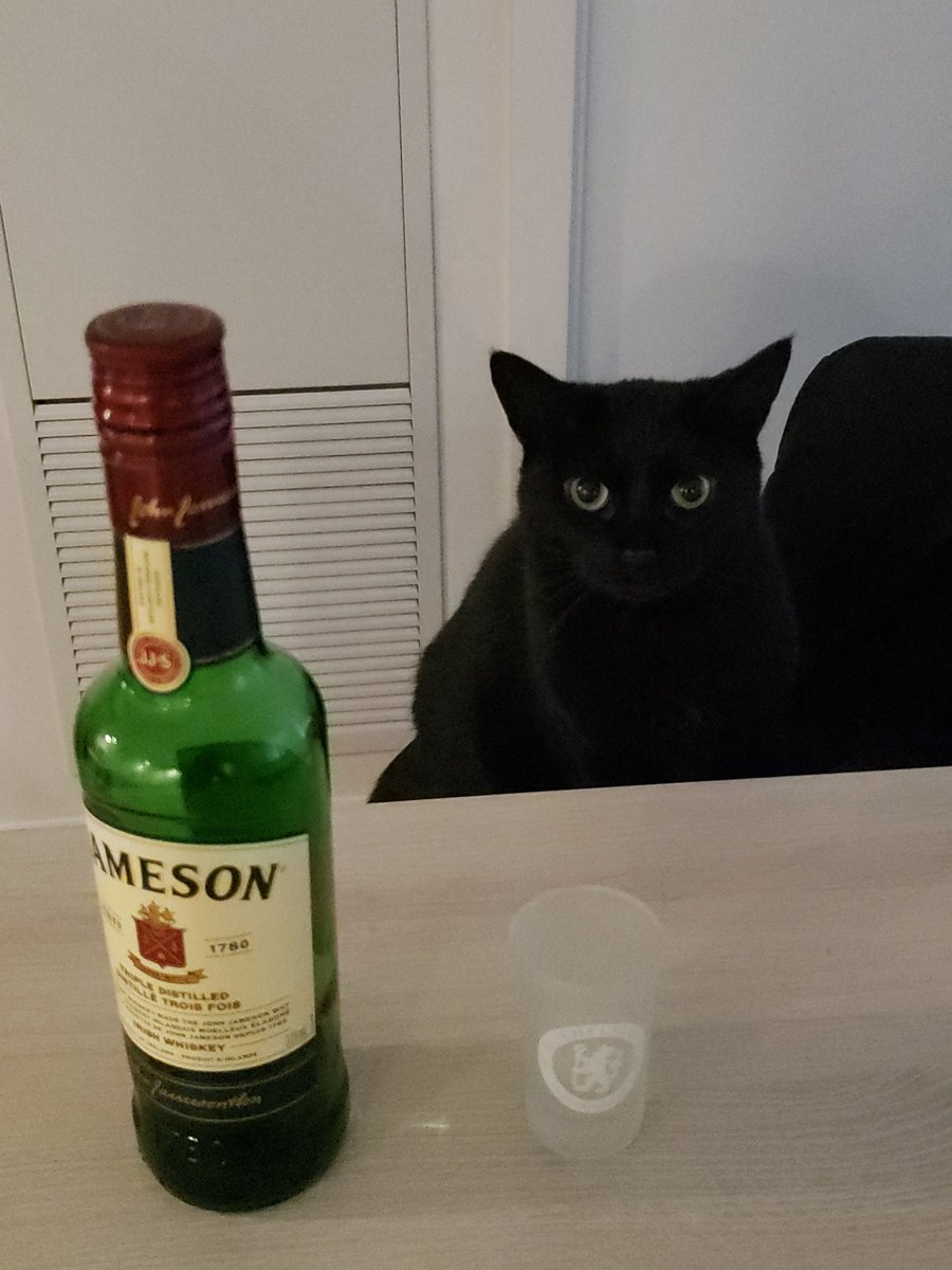 My friend helping me coping with #COVID19 lock down #CatsOfTwitter https://t.co/n7euJIP5Dm