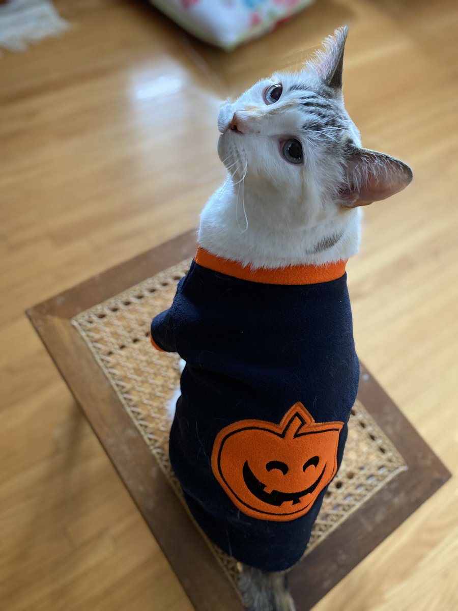 Pincy's #Halloween joke of the day,  with the exciting addition of a Halloween costume (because SOMETHING ought to be better in 2020): What do you get when you run over a pumpkin?   Squash. https://t.co/WVv4rNeK3Q