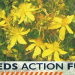 Don't delay in getting your Weeds Action Fund submissions in (11pm Nov 1 deadline). Head over to our facebook page for more information about what actions can be funded under this grant round https://t.co/RO1zHKdNtk #waronweeds #weedsactionfund #tasgov