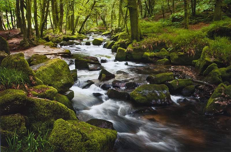 I could really use an afternoon in #nature near a beautiful #brook like this.  #brooks #babblingbrook #thedictionary #smartereveryday #words #wordnerds #podcast #dictionary #wordnerd #podcasting #books #geek #geeky #learn #nerd #smart #wordoftheday #book #word #dailypodcast https://t.co/Nw2yrlWoJT