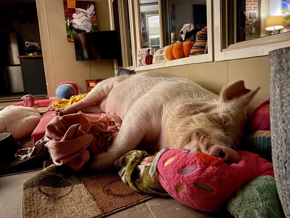 Sweet dreams, my friends.