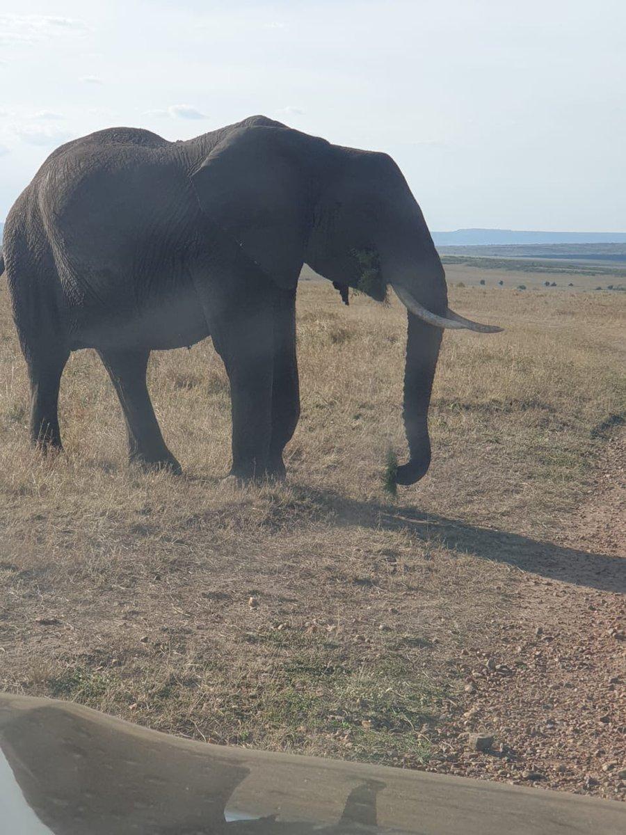 https://t.co/EaCtJdpGBc  #travelafrica #africa #travel #wildlife #travelphotography #safari #nature #wanderlust  #thisisafrica #visitafrica #tourism #wildlifephotography #exploreafrica  #africatravel #photography #adventure #african #traveltheworld  #iloveafrica #africansafari https://t.co/bWa9HD6biw