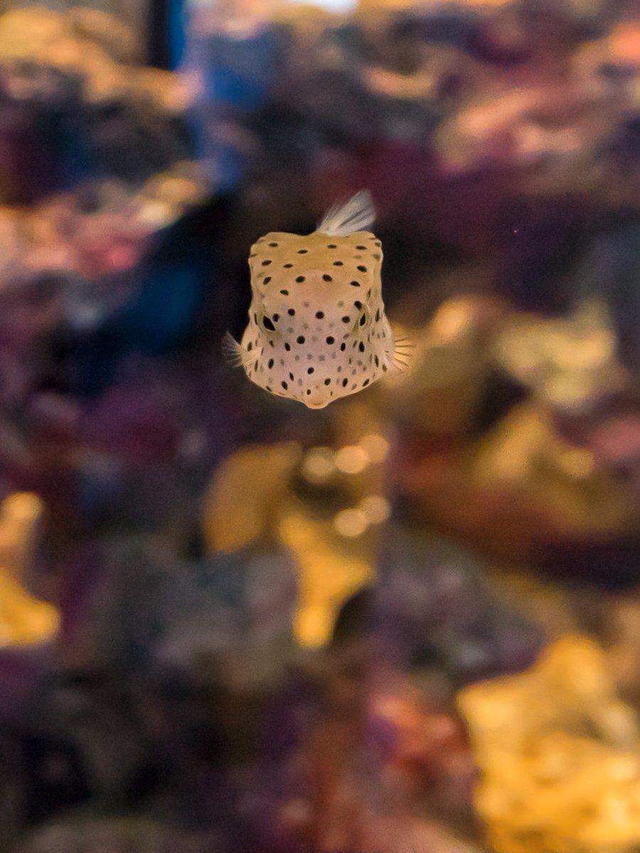 水族館も、たまにはゆっくり 見て動物に 癒されるのも有りやね✨  #四国水族館 #フグ #ベンギン #アシカ #水族館 #α7II  #写真好きな人と繋がりたい  #ファインダー越しの私の世界  #写真撮るのが好きな人と繋がりたい #キリトリセカイ https://t.co/wWEvbPJseF