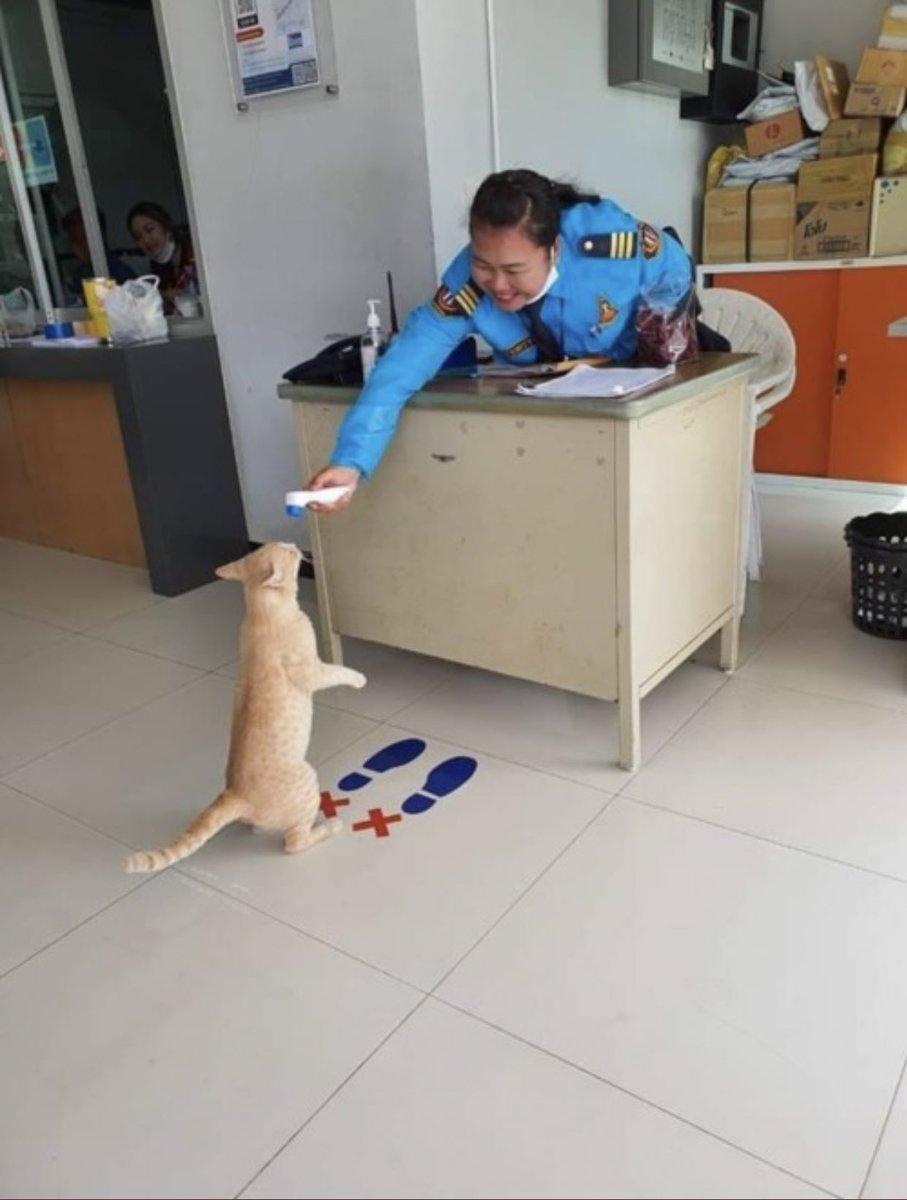 体温チェックを受ける猫
