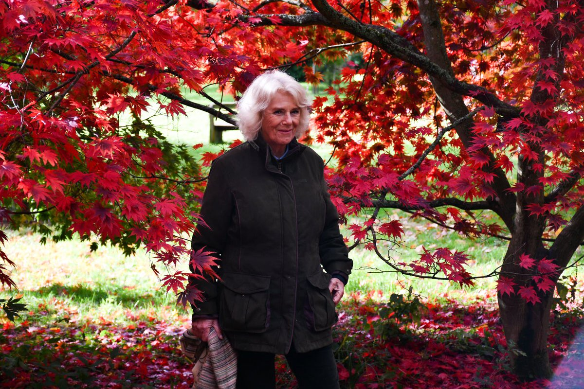 The vibrant Autumn colours are blooming at @WestonbirtArb! 🍁🍂 The Duchess of Cornwall, as Patron of the @WestonbirtFOWA, today visited the Arboretum to hear about the conservation and education taking place there.